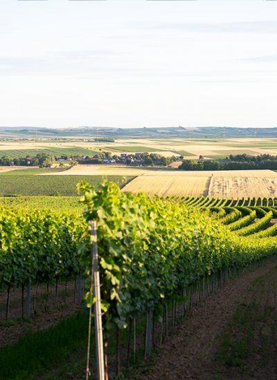 Weingut Breitenfelder Weinviertel Kleinriedenthal